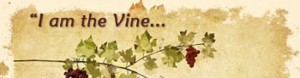 cropped-9_vine-branches1.jpg