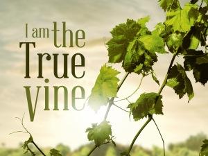 i_am_the_true_vine_std_t_nv2.jpg