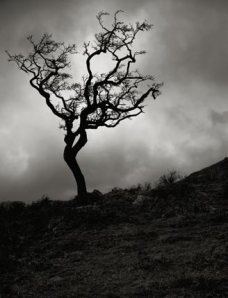 withered-tree